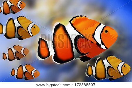 White and Orange Stripe Clown Fish Underwater Illustration
