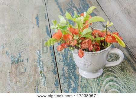 Flowers of Japanese quince in a tea cup on a background of old wooden boards
