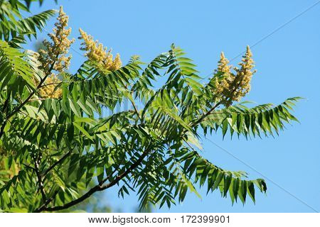 Flowers at the end of a tree extending out into the blue sky.
