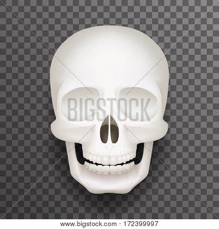 Realistic human skull isolated realistic fashion mockup transparent background design vector illustration