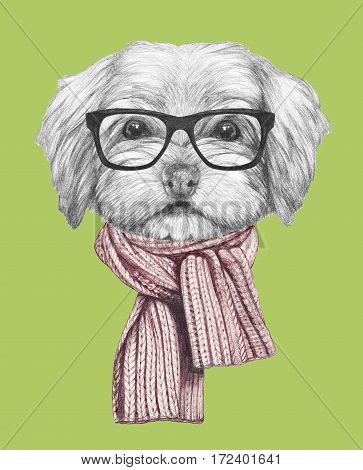 Portrait of Havanese with scarf and glasses. Hand drawn illustration of dog.