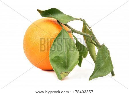 Fruit Orange With Leaves