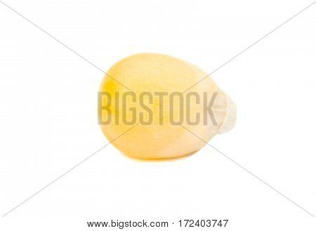 Dry Corn Grain