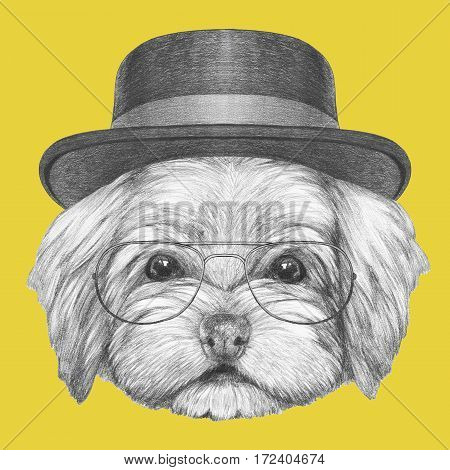 Portrait of Havanese with hat and glasses. Hand drawn illustration of dog.
