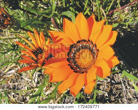 ORANGE FLOWER WITH GREEN LEAFED BACK GROUND 03koh