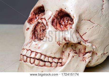 Photo of model human's scull closeup shooting