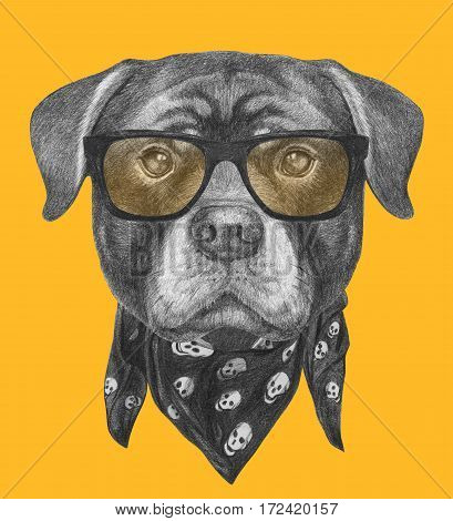 Portrait of Rottweiler with sunglasses and scarf. Hand drawn illustration.