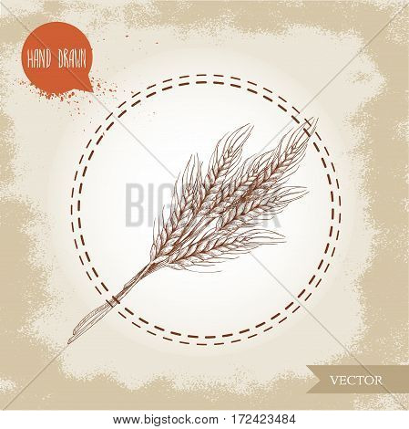 Hand drawn sketch style illustration of wheat sheaf. Bakery and fertility symbol.
