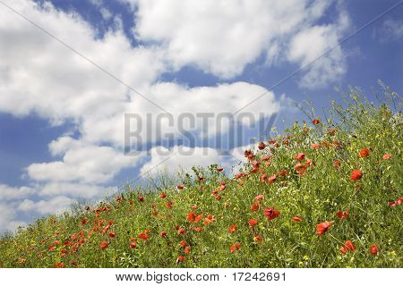 cron poppy and the sky