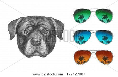 Portrait of Rottweiler with glasses. Hand drawn illustration.