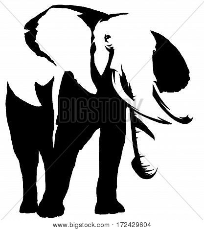 black and white linear draw elephant illustration