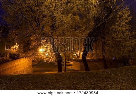 The City Lights In A Winter Town. Foggy And Snowy Weather. Trees With White Frost.