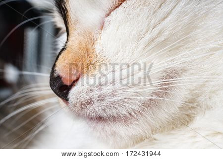 Close Up Of Nose And Mouth Of A Cat