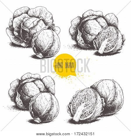 Hand drawn sketch style set of cabbages. Cabbage with leafs cabbage head half of cabbage. Organic fresh farm food vector illustration isolated on white background.