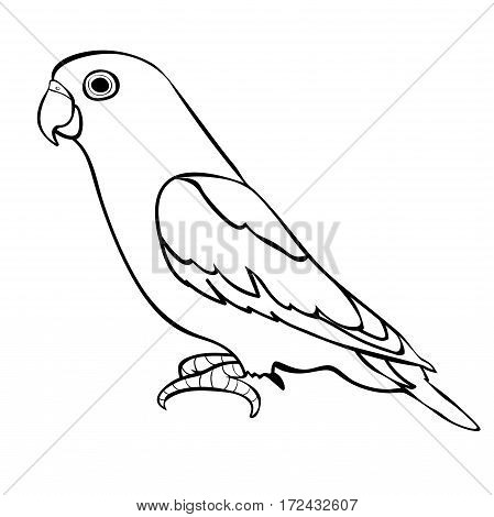 Lovebirds Parrot With A Red Beak. Vector Illustration