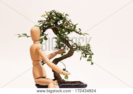 love green bonsai care with wood puppet
