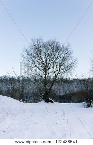 winter forest strewn with snow trees in snow winter