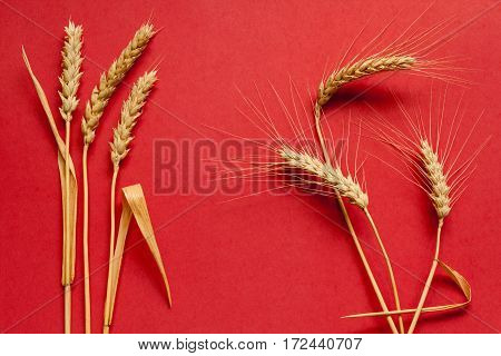 Soft and hard wheat composition on red cardboard close up