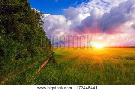 road in the field on a background of storm clouds at sunset. summer landscape.