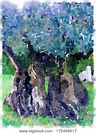 Digital watercolor painting of a closeup of a large olive tree with a thick large tangled trunk. With space for text.