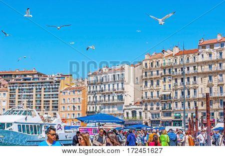 Seagulls In Port