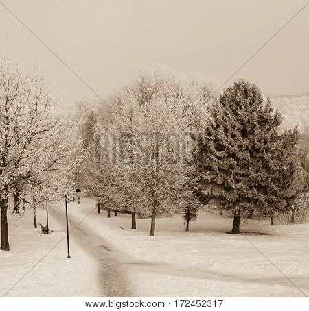 the trees on the Avenue in the Park at winter lantern retro