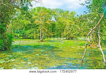 The Freshwater Swamp Forest