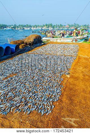 The Walk In Negombo Port