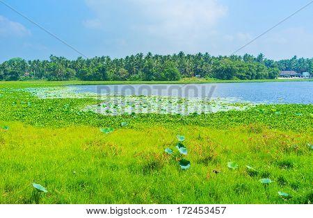 Lake In Madampe
