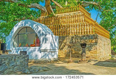 The Sacred Tree In Padeniya Temple