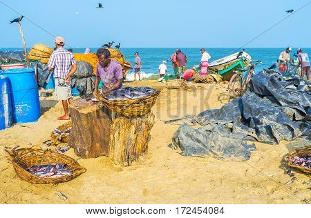 Fish Processing In Port