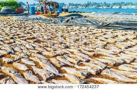 Fish Drying Process