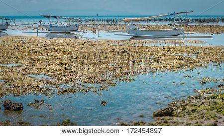 Two Fisher Boats at low tide near seaweed plantations algal - Nusa Penida, Bali, Indonesia.