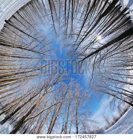 Circular panorama of winter forest, blue sky, Russia