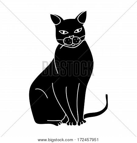 Chartreux icon in black design isolated on white background. Cat breeds symbol stock vector illustration.