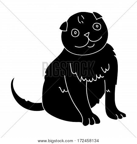 Scottish Fold icon in black design isolated on white background. Cat breeds symbol stock vector illustration.