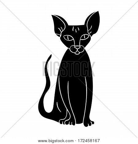 Peterbald icon in black design isolated on white background. Cat breeds symbol stock vector illustration.