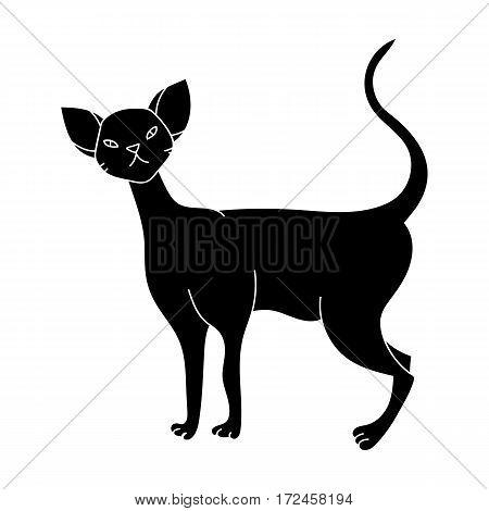 Cornish Rex icon in black design isolated on white background. Cat breeds symbol stock vector illustration.