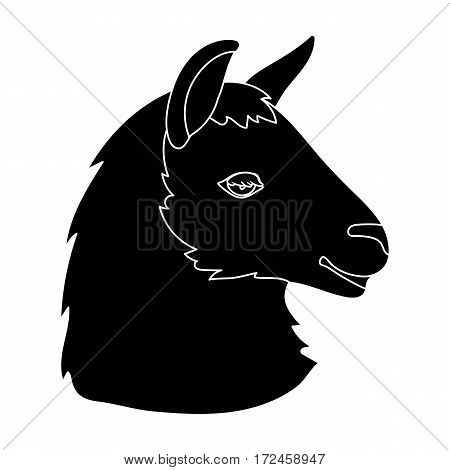 Lama icon in black design isolated on white background. Realistic animals symbol stock vector illustration.