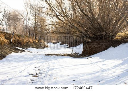 Snow covered path in dried creek bed with trees, shrubs, exposed roots and banks on each side.