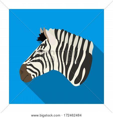 Zebra icon in flat design isolated on white background. Realistic animals symbol stock vector illustration.