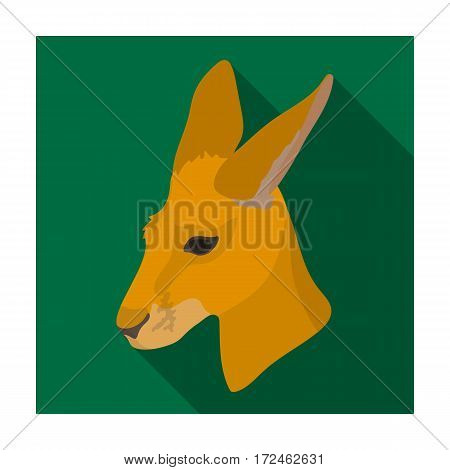 Kangaroo icon in flat design isolated on white background. Realistic animals symbol stock vector illustration.