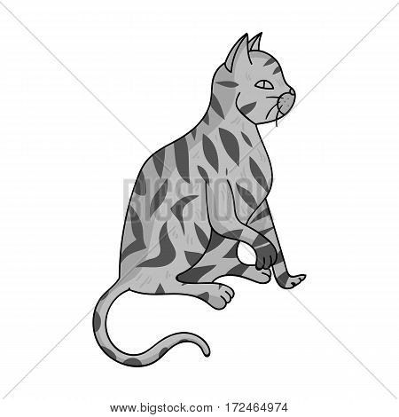 American Shorthair icon in monochrome design isolated on white background. Cat breeds symbol stock vector illustration.