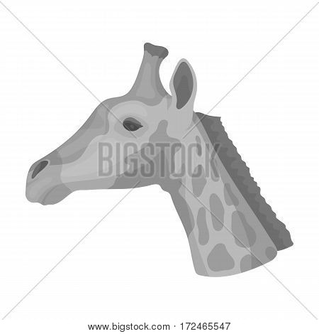 Giraffe icon in monochrome design isolated on white background. Realistic animals symbol stock vector illustration.