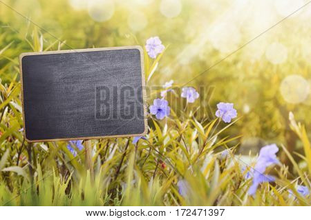 Blank wooden sign in garden. You can put your image here