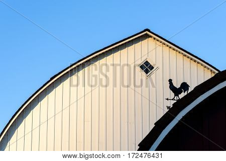 Late evening sunlight on two barns, rooster weather vane in silhouette