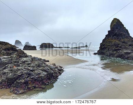A lone Sea Star awaits the tide's return