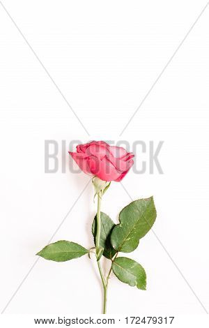 Beautiful red rose flower isolated on white background. Flat lay top view. Mothers day or valentines day background.