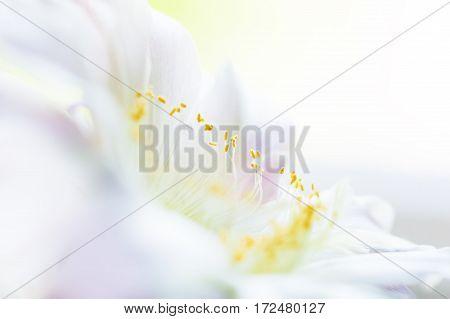 Macro Image Of Cactus Flower, Selective Focus.