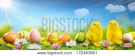Easter chicks and eggs on meadow